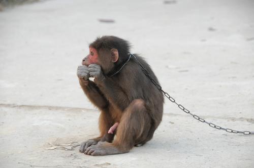 החמרה בענישת נאשם שהורשע בהתעללות בבעל חיים